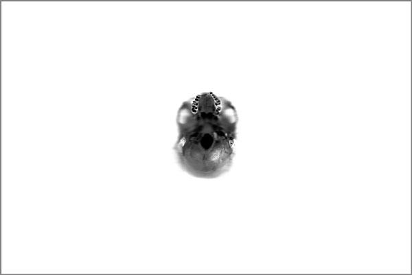 Décollage, 2012-2013 / Photographie noir et blanc / 60 x 90 cm